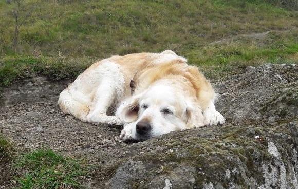 schwerster hund der welt guinness